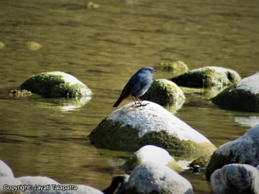 River Bird.jpg